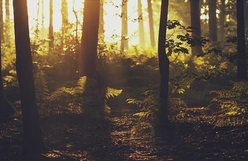 Where dreams are made (Explore #3, 14.09.2012) (Mathijs Delva) morning autumn trees light sun sunlight mist nature leaves misty fog forest sunrise woodland early woods bokeh foggy fresh depth moist goldenlight 100mmf28macro