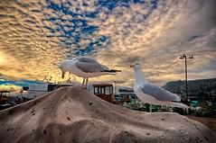Seagulls  [Explore 14/09/2012] (James Waghorn) Tags: sunset sea seagulls bird beach clouds nikon sigma explore perched hastings ultrawide lightroom sigma1020 cs6 d5000 blinkagain bestofblinkwinners blinksuperstars