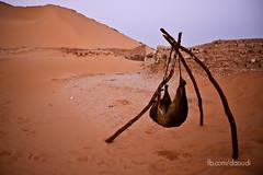 IMG_9542 (sNAKEd Photography) Tags: sahara canon algeria algerie sud afrique 500d adrar