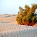 Tunisia-3795 - Hard to leave
