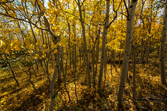 (Turner Smith Photography) Tags: red fall nature colors landscape colorado lakes feather aspen wwwcoloradophotographyexperiencecom