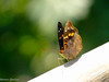 Borboleta (Marney Queiroz) Tags: color nature cores do natureza foz iguacu colorido queiroz marney panasonicfz35 marneyqueiroz