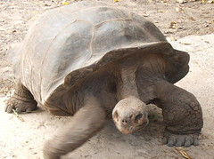 "George The Oldest Tortise 2007 • <a style=""font-size:0.8em;"" href=""http://www.flickr.com/photos/69210373@N08/8033684394/"" target=""_blank"">View on Flickr</a>"