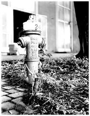 Hydrant 24 (fidepus) Tags: ifttt 500px ilford fp4 black white hydrant 24 bokeh seagull