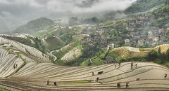 Pingan farming (ANOTHER DAY AT THE OFFICE) Tags: pingan longji longsheng agriculture village farming paddy fields panorama people locals travel adventure ping an clouds rice terraces