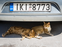 Summer... (Cirrusgazer) Tags: crete fe55mmf18za greece sonya7r automobile cats contentment heat hot noworries numberplate resting shade sleeping summer summercar together two ginger cool twin pair