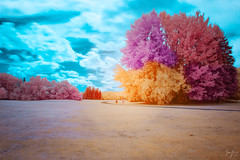 Nature's Color Wheel (jrseikaly) Tags: infrared color trees nature montreal quebec canada jack seikaly outdoor ir multicolor colorful botanical gardens plant