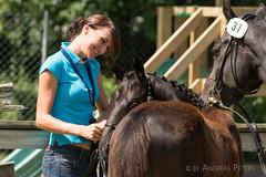 DSC09589_s (AndiP66) Tags: fohlenschau foalshow dagmersellen luzern 2016 juli july 6august2016 pferd horse schweiz switzerland kantonluzern cantonoflucerne concours wettbewerb equestrian sports pferdesport sport martinameyer grueb wolhusen sony sonyalpha 77markii 77ii 77m2 a77ii alpha ilca77m2 slta77ii sony70400mm f456 sony70400mmf456gssmii sal70400g2 andreaspeters ch