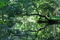 Parc du chteau de Beaulon, Saint-Dizant-du-Gua (17) (Yvette Gauthier) Tags: charentemaritime 17 poitoucharentes chteau chteaudebeaulon saintdizantdugua fontainesbleues jardin jardinremarquable fontaine source parc