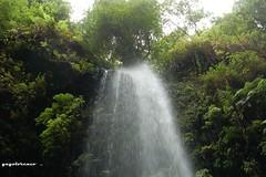 Bosque de Los Tilos... (yayolorenzo) Tags: bosque de los tilos