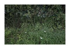 ||||||||||| (csinnbeck) Tags: shrubbery