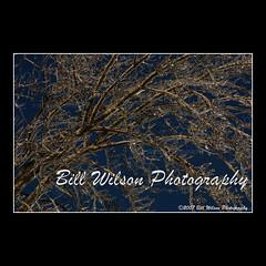 ice storm (wildlifephotonj) Tags: icestorm frozen trees winter cold