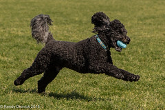 Every dog has his day... (rdroniuk) Tags: cole dogs