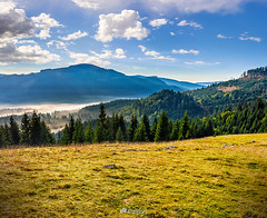 spruce forest in foggy Romanian mountains-151609 (3) (M. Pellinni) Tags: ifttt dropbox forest fog spruce mountain landscape romania nature morning mist beautiful tree autumn sunrise pine natural fir season outdoor color haze park conifer environment dark background light travel wood misty europe trees green foliage foggy view hill sunlight blue tops silhouette meadow hillside