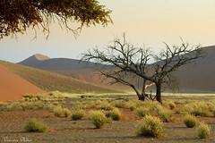 Namib-Nakluft National Park, Namibia (Sumarie Slabber) Tags: namibia sosusvlei nature sanddunes landscape grass trees sumarieslabber namibnakluftnationalpark desert