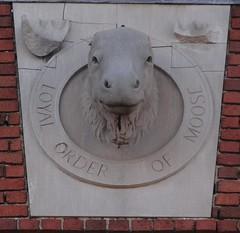 Moose Elkins, WV (Seth Gaines) Tags: westvirginia elkins moose