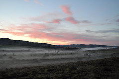 (Steini789) Tags: trees sky mountains fog clouds iceland moss