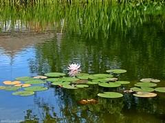 It may be a beautiful painting (AvóQuéu) Tags: fleursetpaysages mygearandme lelitedespaysages