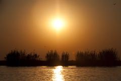 African Sunset2 (aaafotos) Tags: africa sunset day1 elephants botswana unreal chobe lileiladark