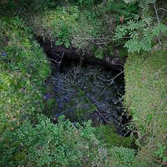 Salmiakkisilm (MikeAncient) Tags: green nature water forest suomi finland moss vesi luontokuva mets luonto undergrowth sammal vihre diamondshape naturephotgraphy kuhmoinen aluskasvillisuus salmiakkikuvio kylm luonnonvalokuvaus