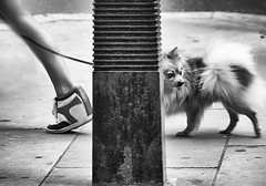 promenade (White_V) Tags: street woman dog london canon walking shoe pavement leg style wb promenade column whiteandblack platformshoes