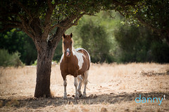 Easy (Danny T Photography) Tags: horse tree animal wildlife riding shelter skewbald