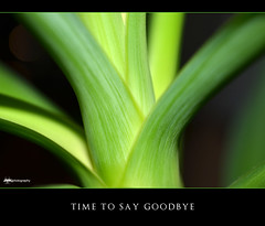 038/365 Time To Say Goodbye (Razorbacks) Tags: green photography nikon time d creative palm micro to 40 mm goodbye nikkor makro say jmk 7000 project365