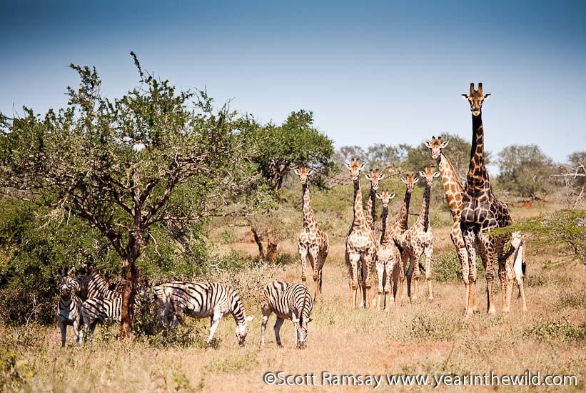 Hluhluwe-iMfolozi Park - South Africa