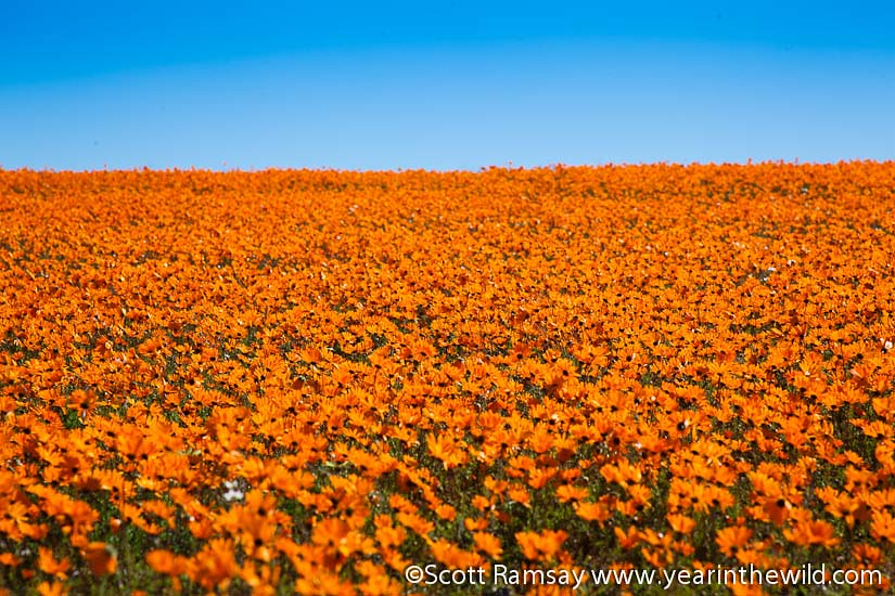 Namaqua National Park - South Africa