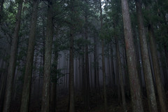 Misty forest (moriyu) Tags: plant tree japan forest  kanagawa
