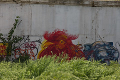 The Chicken That Shakes the Barley (Roblawol) Tags: nyc newyorkcity blue red streetart ny newyork art chicken colors grass graffiti mural colorful tiger queens lic rooster spraypaint longislandcity thebigapple theconcretejungle licblockparty