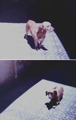 TINA (Nicolas A. Narvaez Polo) Tags: dogs vintage bogota tina perros servicioejecutivo
