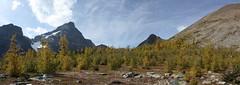 Saddleback (cec403) Tags: blue autumn sky canada mountains yellow canon rockies gold hiking alberta larches xsi banffnationalpark saddlebackpass