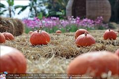 1Day-trip-Jim-Thompson-Farm&Dasada-Gallery_E12663461-012