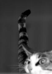 (ratbril//M.Prat//) Tags: blackandwhite cat cola bn gato queue gat cua ratbril