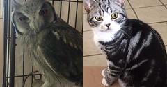 I think my cat is an owl. via http://ift.tt/29KELz0 (dozhub) Tags: cat kitty kitten cute funny aww adorable cats