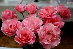 Thornbury Horticltural Society Show - August,2016. (Eric R  Dodd) Tags: thornburyhorticulturalsociety thornbury thornburysouthgloucestershire flowershow ericrdodd