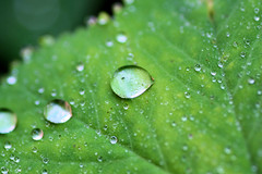 Landesgartenschau Eutin (janinawarncke1973) Tags: landesgartenschau eutin schleswigholstein deutschland ostholstein natur makro macro pflanzen blumen makrofotografie wassertropfen bltter bienen wespen
