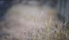 身邊原本不起眼的地方都變的特別 (M.K. Design) Tags: 2016 台灣 南投縣 埔里鎮 大坪頂 嬰兒 人像 阿愣 淺景深 散景 自然 壓縮 長焦 定焦 尼康 生活 taiwan puli infant danboard portrait nikon d800e afs 105mmf14e ed tele primelens baby babe bokeh nature bokehful life