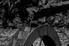 Horto Florestal (Campos do Jordo-SP/Brazil) (Gabi Sakamoto (Gah'Be)) Tags: camposdojordo turismo sopaulo serra camposdojordoturismo natureza nature naturebeauty detalhes brasil brazil 2016 sp camposdojordosp camposdojordooquefazer naturezamaravilhosa spemimagens flores flowers birds encantamento valeapenaconhecer visitar explorar fotografar muitoamor busca momentos lago cuazul blue skyviajarconhecerviagemviagem de invernoo que fazer no invernodetalhesconectados naturezapercepohorto florestalhorto florestal campos do jordohorto jordohortoflorestalnatureza jordotranquilidade em jordosossego jordofuja caosfuja agito