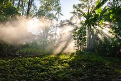 And then there was light... (Bart Weerdenburg) Tags: light sun sunrays sunrisesunrise bali sidemen indonesia morning jungle