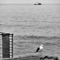 The little boat that could and the seagull that couldn't care less (Dom Guillochon) Tags: noiretblanc seagull pacificocean coastline waves boat life nature humans ocean sunsetcliffs oceanbeach