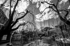 DSC01368 (Damir Govorcin Photography) Tags: trees chinese gardens sydney water culture zeiss 1635mm sony a7ii blackwhite monochrome darling harbour