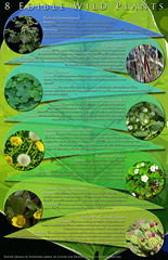 Edible Wild Plants Printable Poster (cleverfoxphotography) Tags: graphic design edible plants hiking collecting cooking nature natural forage wilderness survival free poster printable guide how burdock clover cattail sorrel prickly pear nopales cactus chickwee purslane dandelion woods forest remedy