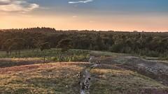 Bergerbos im Abendlicht (moni-h) Tags: afferden august2016 eos760d heidelandschaft hetquin limburg limburgnoord maasduinen natur naturgebiet nederland niederlande sommerabend uitkijktoren nl bergerbos abendlicht