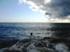 surviving the winds (Lovely Pom) Tags: winds storm surviving feather spider sea ocean water clouds rocks dark