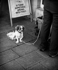Is there something wrong with you? (DeGrandDuke) Tags: dog bored something wrong sad luxembourg luxembourgcity nikon blackandwhite streetphotography street somethingwrong sign