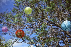 Lanterns (Kirsten~) Tags: lanterns nature trees