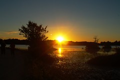 sun set (f.tyrrell717) Tags: sun set whit bogs nj pine barrens