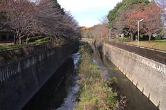 (setagayatoieba) Tags: japan tokyo setagaya setagayatoieba kamisoshigaya park river winter